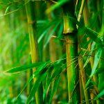 Bambooland Indonesia: An Idea Franchise for Social Enterprise